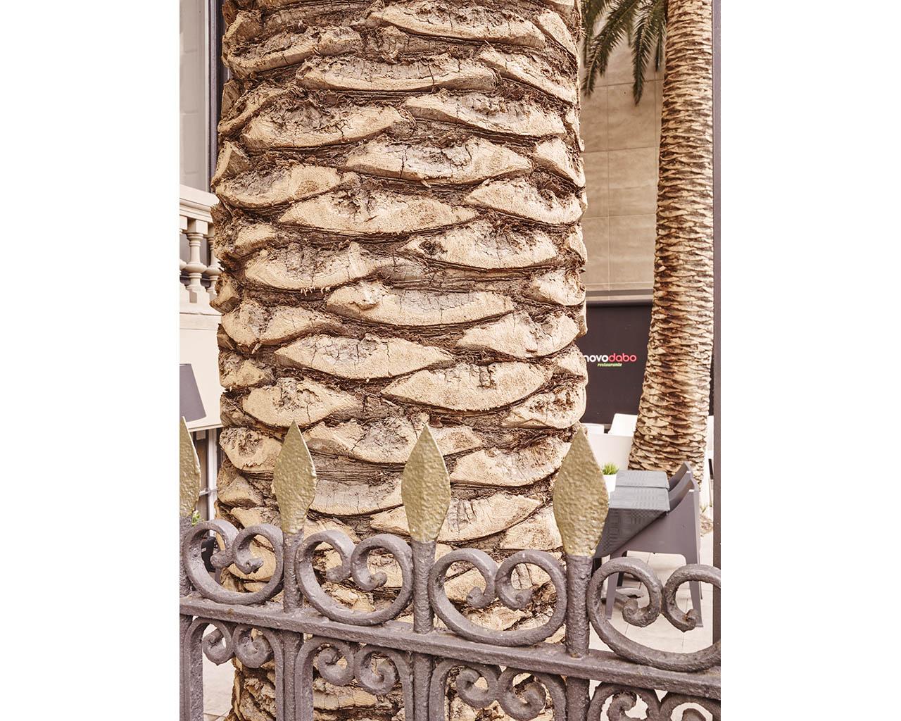 Novodabo-palmera-terraza